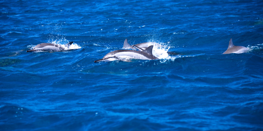 Dolphins encounter on the West Coast