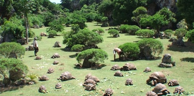 Giant Tortoise and Cave Reserve Rodrigues
