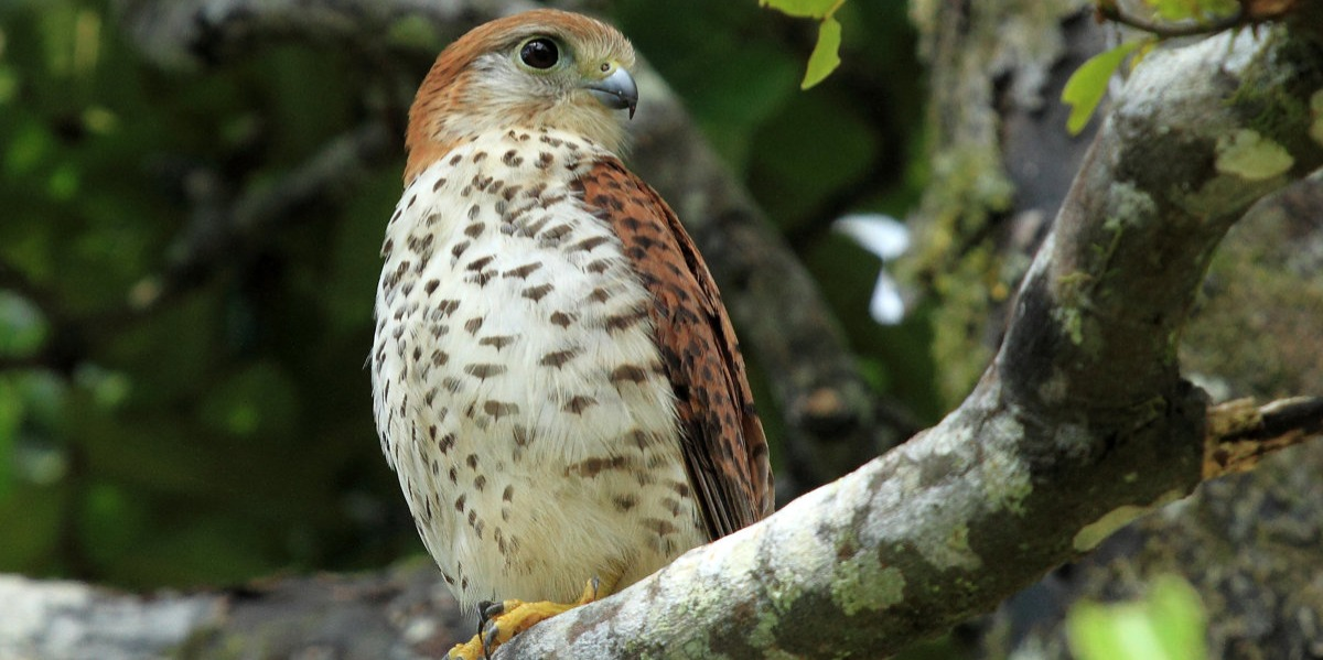 Bird-Watching at Black River Gorges National Park