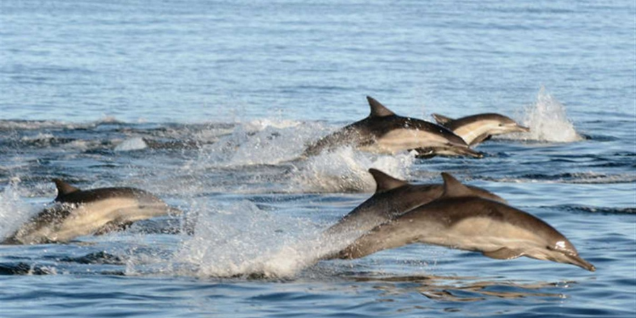 Dolphin Expedition