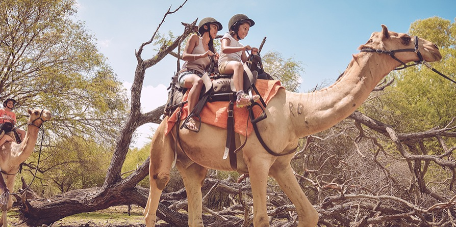 Camel Ride at Casela