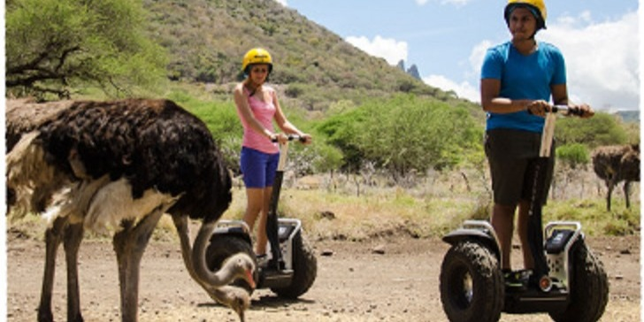 Ostrich encounter
