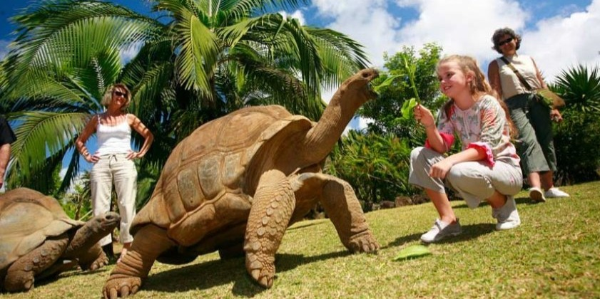 Interaction with the tortoises